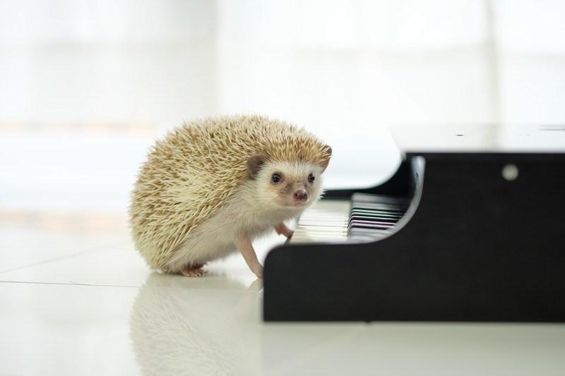 ピアノ体験レッスン受付中です!4月からの空き状況につきましての画像
